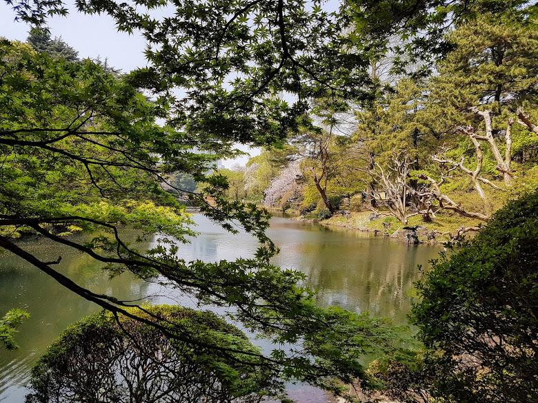 下の池附近的楓葉