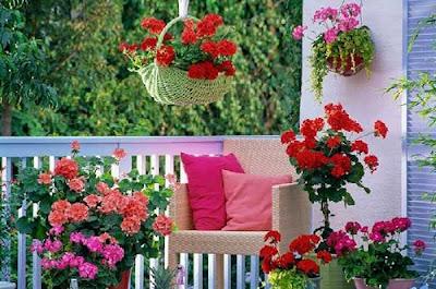 что посадить на балконе из цветов