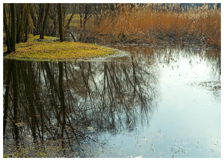 wysepka, wiosna w parku, trzcina
