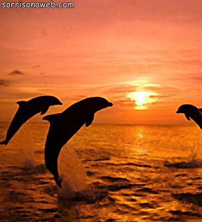 Golfinhos - Sorriso na Web
