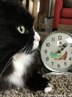 Maggie the cat in profile with a clock behind her