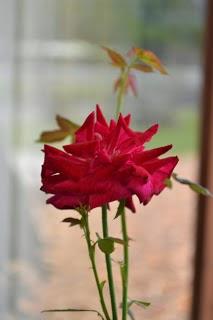 Puisi : Katakan Dengan Bunga