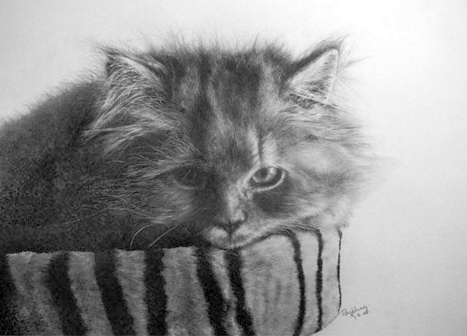 gatos,a,lapiz