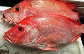 The Latest Of 10+ Benefits Eatting Snapper Fish Meat for Babies As Healthy Nutrition Intake - Healthy T1ps