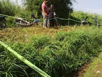 2 Mayat ditemukan pada saluran irigasi sawah di Dengkol Malang
