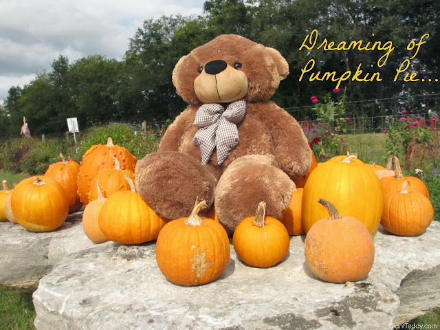 Giant Teddy bear Sunny Cuddles loves pumpkins in this beautiful round orangey