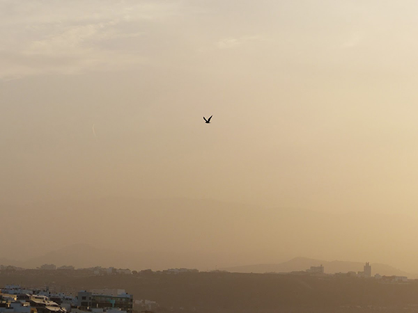 Vídeo: Gran Canaria ha amanecido con calima, martes 5 diciembre