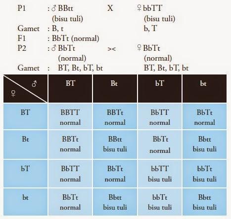 Penyimpangan semu hukum mendel info pendidikan dan biologi persilangan gen komplementer ccuart Choice Image