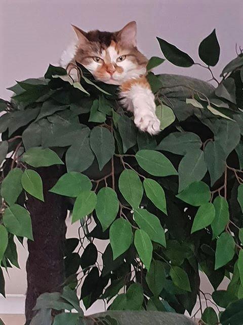 Tall Cat Tree