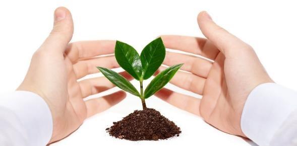 Importancia de las plantas para el Medio Ambiente y el Ser Humano