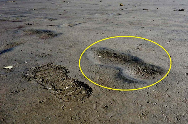 Oldest Human Footprints In North America Found On Canadian Coast