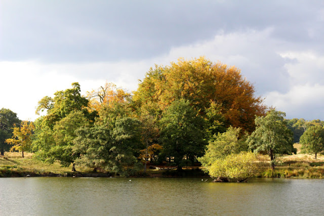 An Autumn Walk in Richmond Park