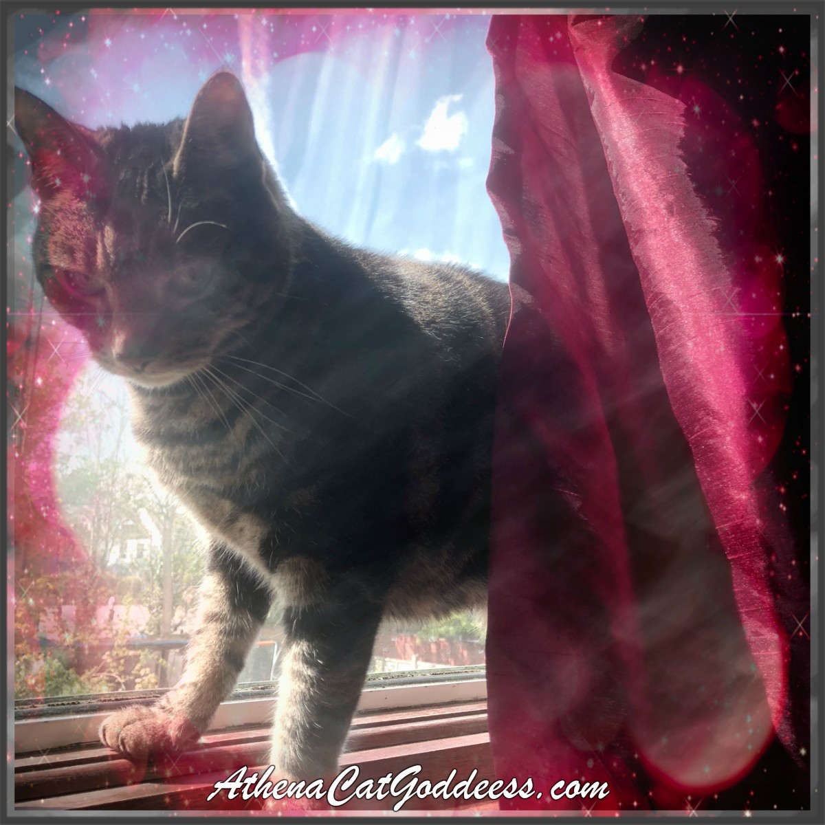 May The 4th Be With You Cat: Athena Cat Goddess Wise Kitty: Caturday Art: May The 4th