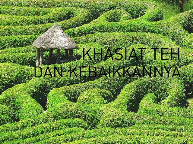 Khasiat teh dan kebaikkan teh