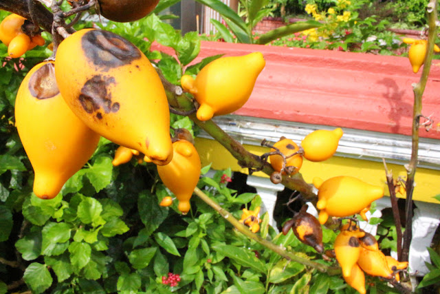 tumbuhan di kuil ke lok si