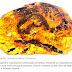 O filhote de cobra mais antigo do mundo encontrado preservado em âmbar
