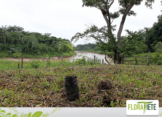 A importância do reflorestamento nas margens e nascentes dos rios