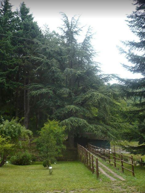 l'inizio del sentiero delle cinque foreste