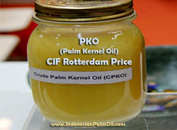 pko palm kernel oil cif rotterdam price