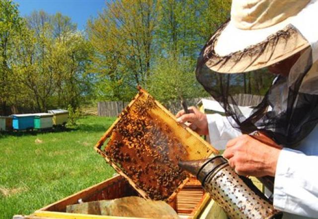 Δύσκολη χρονιά για το μέλι ελάτου στην Πελοπόννησο