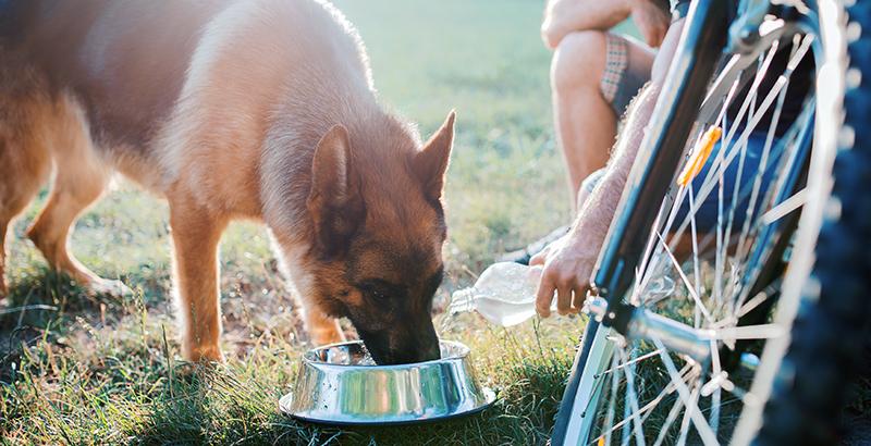 Hydratation en période chaude : n'oubliez pas votre chien et votre chat !