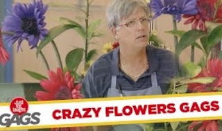 Funny Video – The Craziest GARDEN in The World – Best Of Just For Laughs Gags