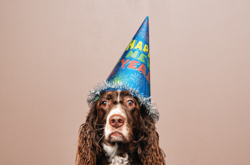 dog with new years eve party hat on