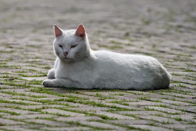 Katzenimpressionen