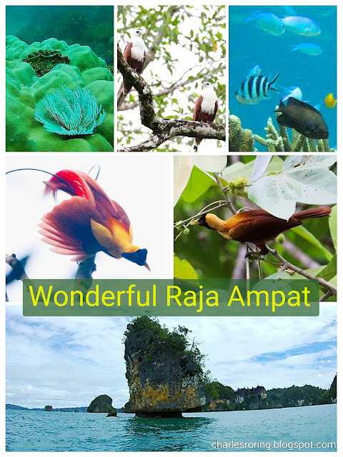 Hiking and Birding, swimming and snorkeling in Raja Ampat