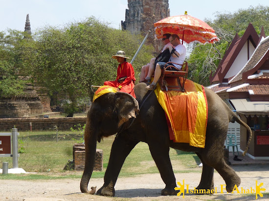 Thai elephant in Ayutthaya Historical Park