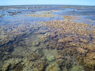 Soft corals at low tide on an inshore reef