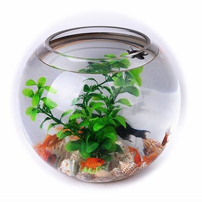 Gambar dan Foto Desain Aquarium Air Tawar