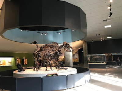 La Brea Tar Pits skeleton in museum