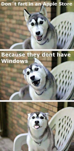 Funny animal joke of the day
