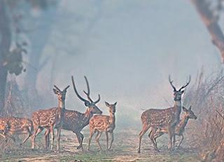 dudhwa national park kaha hai aur kis rajya me sthit hai