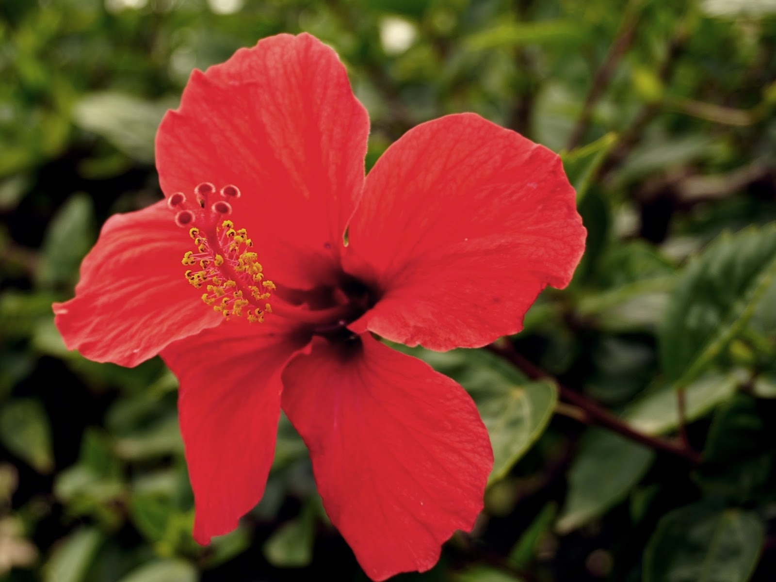 hiszpańskie kwiaty, panidorcia, blog, Hiszpania, podróże