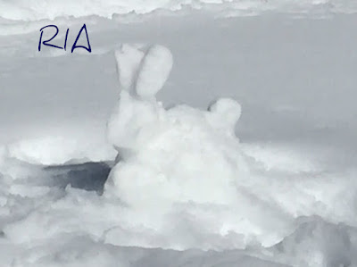 Snow bunny along the way to Grub Hut