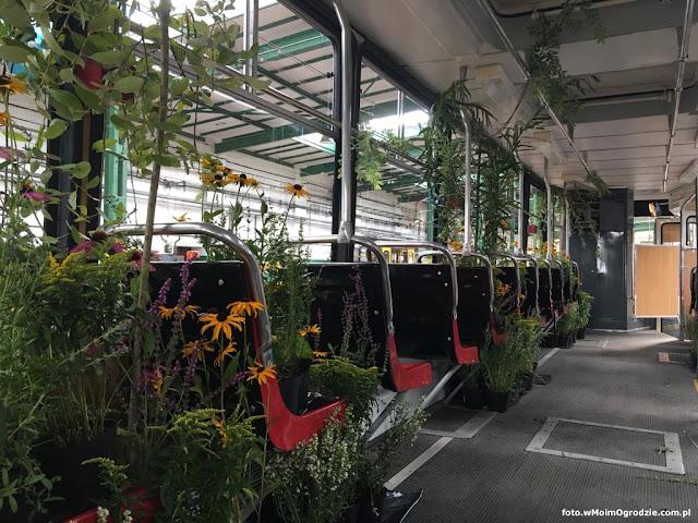 tramwaj udekorowany kwiatami