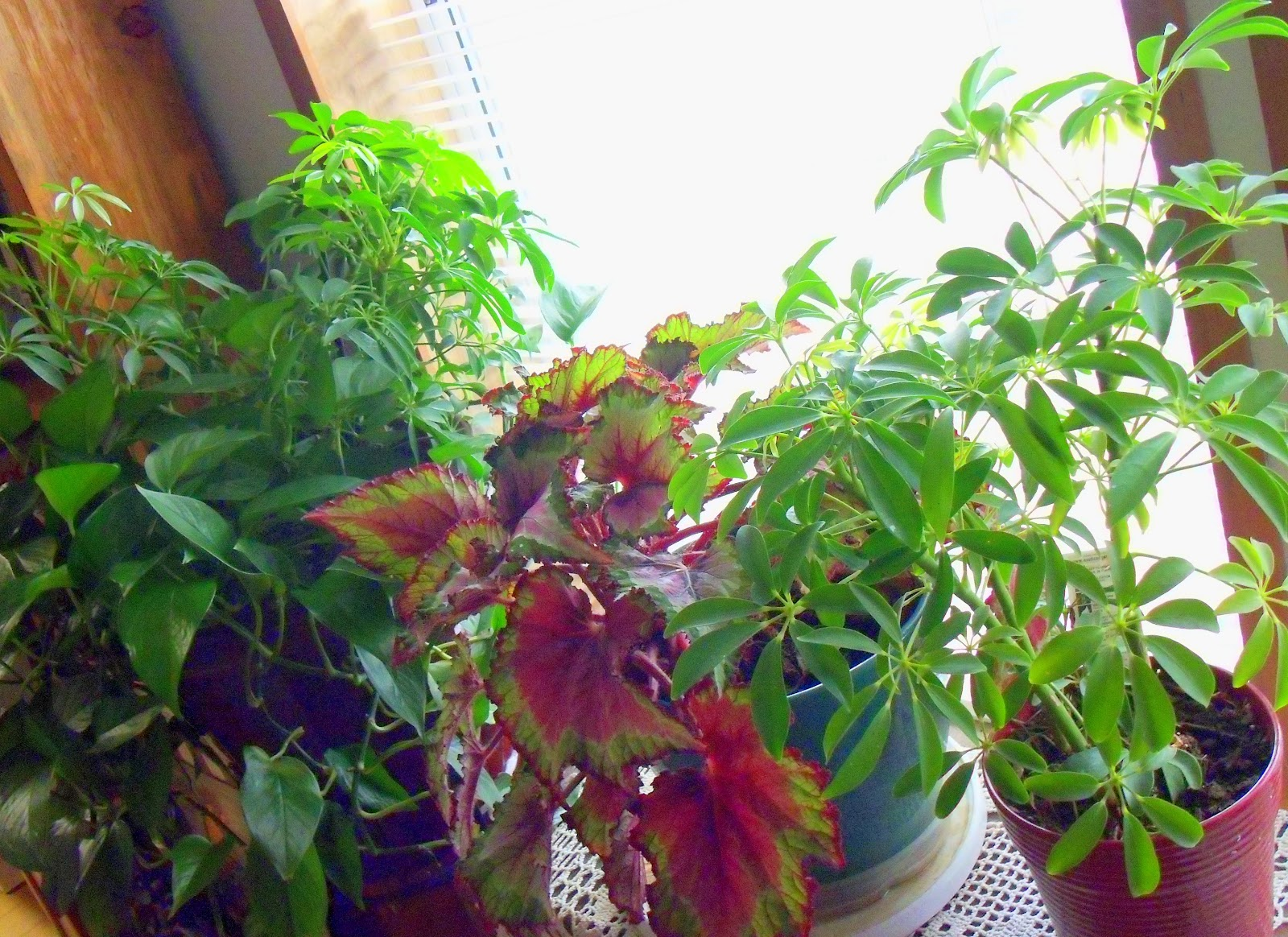 In House Plant Make The Best Of Things House Plant Fanatic