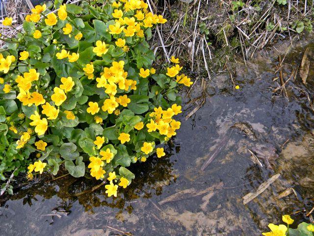 woda, kwiaty, rzeczka, flora