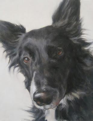 dog portrait newfoundland border collie