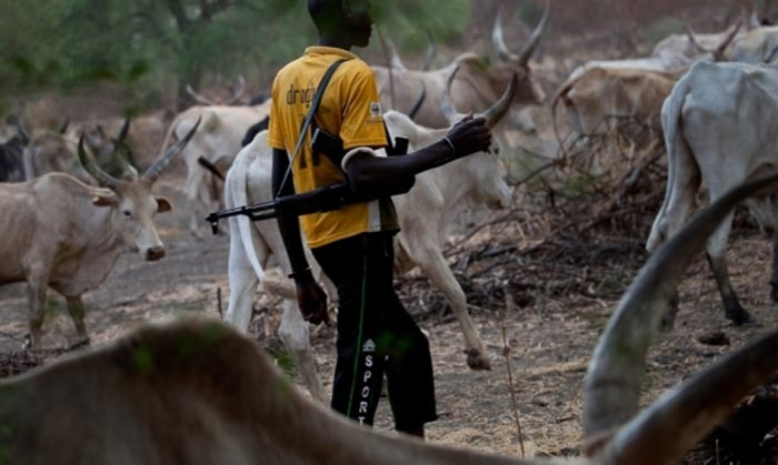 Anti-grazing bill: Ekiti court sentences herdsmen to prison for public rearing of cows