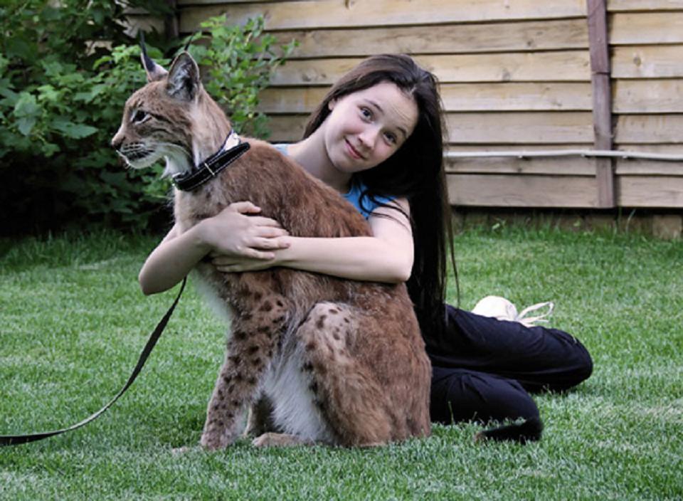 Lynx-cat-healthiana