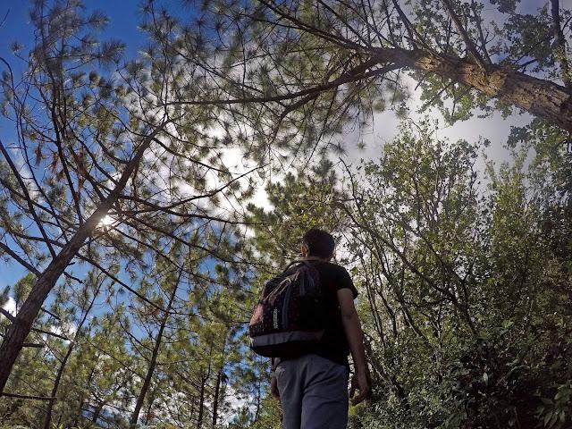 Pine Trees x Mt. Ulap x Ken