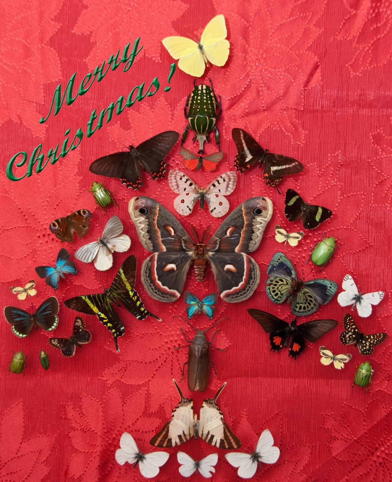 Northwest Butterflies Merry Christmas