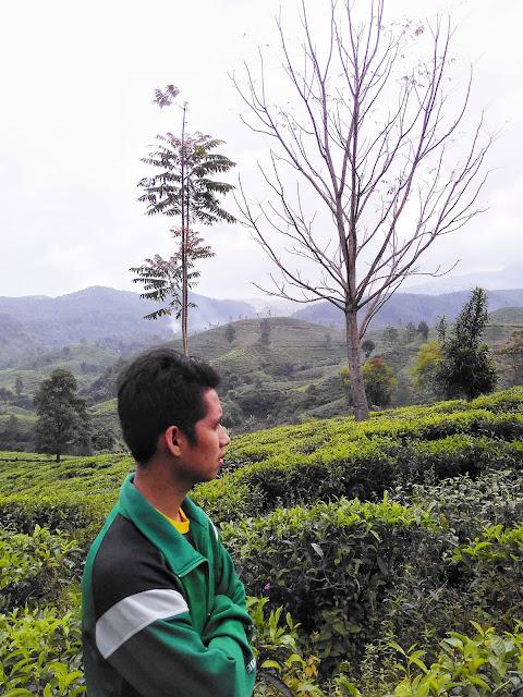Bukit Kacapi, Kolam renang di tengah hamparan kebun teh