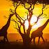 Visit Kenya with Vacation Inspirations