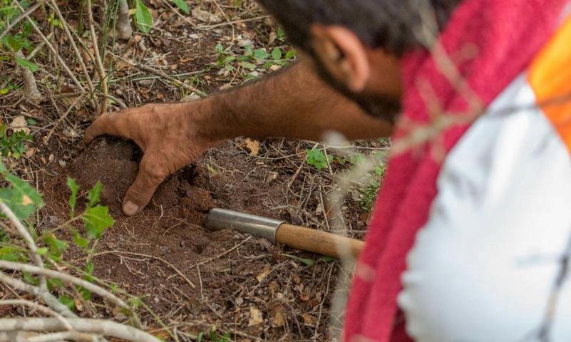 Κυνηγώντας στα δάση της Θράκης έναν «κρυμμένο θησαυρό»