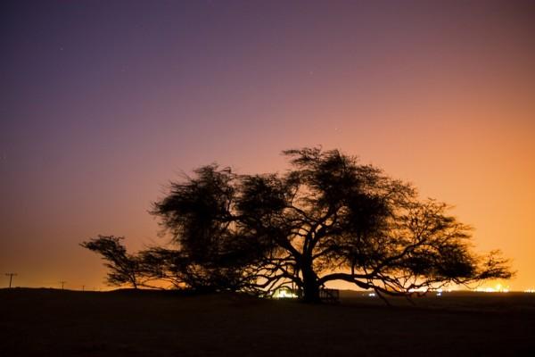 تعرفوا على شجرة الحياة فى البحرين SUdaC1-600x400.jpg