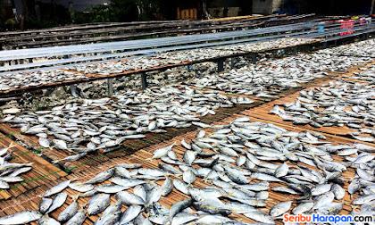 ikan asin yang dijemur di pinggi pantai